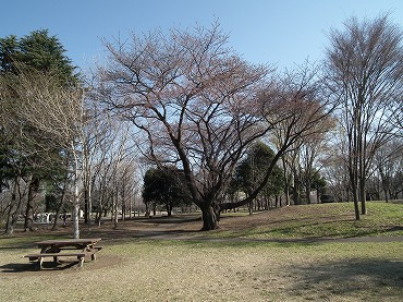 Ss2011_0401_009